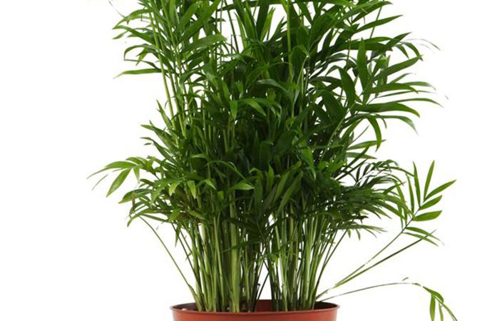 Las mejores plantas para tu hogar noticias zonaprop for Planta tropical interior