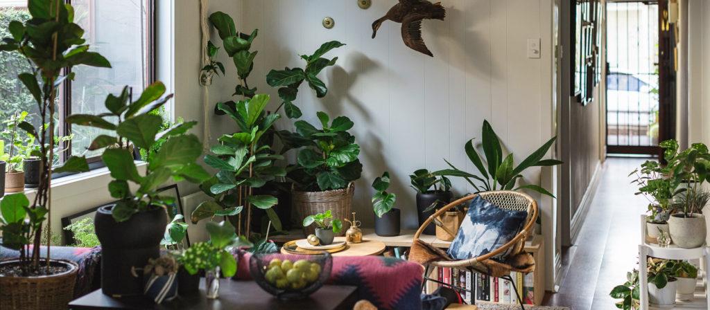 Las mejores plantas para interiores noticias zonaprop for Plantas de interior duraderas