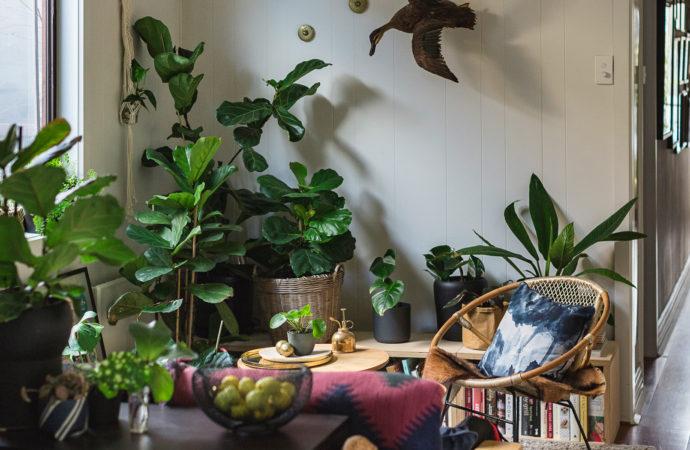 Las mejores plantas para interiores propiedades lo forte - Mejores plantas para interior ...